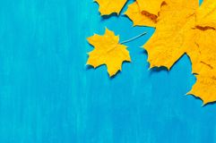 Autumn background. Seasonal autumn maple leaves on the blue background. Autumn composition royalty free stock photography