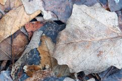 Background from different autumn leaves.Dry leaves and twigs on Royalty Free Stock Photos