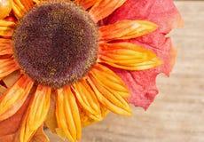 Autumn Background Royalty Free Stock Image