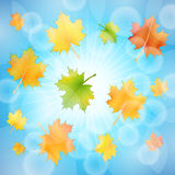 Autumn background sky Royalty Free Stock Photography