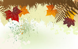 Autumn background with a space for a text Royalty Free Stock Images
