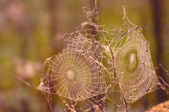 Autumn Background With Spider Webs Royalty Free Stock Photography