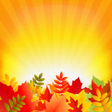 Autumn Background With Sunburst Stock Image