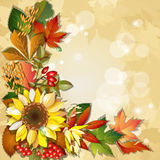 Autumn background with sunflower Stock Photo
