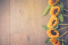 Autumn background with sunflowers. View from above. Retro filter effect Stock Images