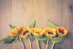 Autumn background with sunflowers on wooden board. View from above. Retro filter effect Stock Photos