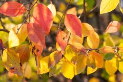 Autumn background.  Sunlit red and yellow leaves. Autumn background. Bright sunlit red and yellow leaves Royalty Free Stock Images