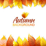 Autumn Background Template Royalty Free Stock Image