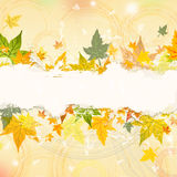 Autumn background with text space Stock Photos