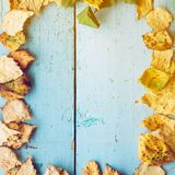 Falling fall leaves Stock Photography