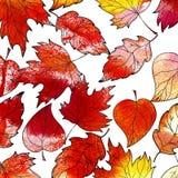 Autumn Background tiré par la main Lames de rouge d'automne Tex d'aquarelle Illustration Stock