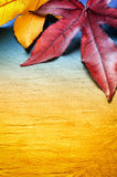 Autumn background with tree leaves Stock Photo