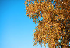 Autumn background tree and sky Stock Photography