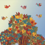 Autumn background with trees Stock Photo