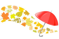 Autumn background with an umbrella Stock Photos