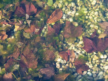 Autumn background under frozen water Royalty Free Stock Image