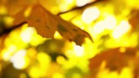 Autumn Background utan fokus stock video