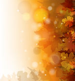 Autumn background. Vector colorful autumn background, eps10 file, gradient mesh and transparency used Royalty Free Stock Photography