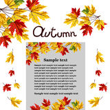 Autumn background vector illustration. Banner of autumn leaves vector illustration. Background with hand drawn autumn leaves. Design elements. Autumn leaves fall Stock Images
