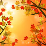 Autumn background. Vector autumn leaves on bright sunny background and copy space for your text royalty free illustration