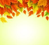 Autumn background vector template of orange and yellow maple leaves falling. For fall season with empty blank space for text. Vector illustration vector illustration
