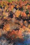 Autumn Background Vertical Stock Fotografie