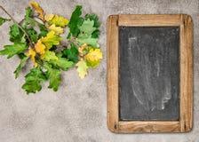 Autumn background vintage chalkboard oak leaves Stock Photo