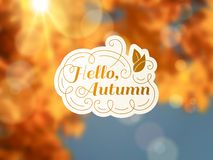 Autumn background with vintage label and sun beam. Stock Image