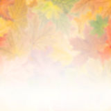 Autumn background 011 Stock Images