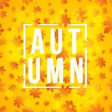 Autumn background and white banner with text. Orange leaves of a maple tree. Hello, Autumn. Background for your project. Abstract Stock Images