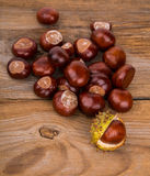 Autumn Background whith chestnut Stock Images