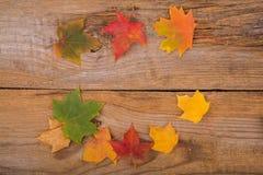 Autumn Background whith  maple leaf Royalty Free Stock Photo