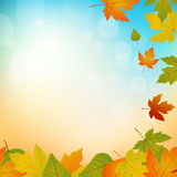 Autumn background. Width falling leafs and bokeh Vector Illustration