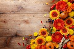 Free Autumn Background With Orange And Yellow Gerbera Flowers, Red Berries, Decorative Pumpkins, Wheat Ears. Thanksgiving Day Stock Image - 157960281