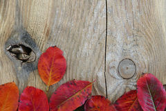 Autumn background, wooden board with red leaves at one side Stock Images