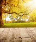 Autumn background with wooden planks Stock Image