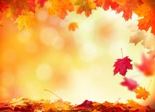 Autumn background with wooden planks Royalty Free Stock Image