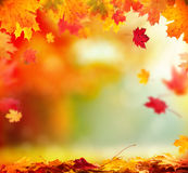 Autumn background with wooden planks Royalty Free Stock Photos
