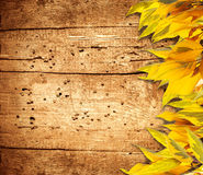 Autumn background with yellow foliage and old wood Stock Images