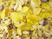 Autumn background. The yellow and green leaves of the trees fell. royalty free stock photography