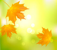 Autumn background with yellow leafs. Back to school. Vector illustration stock illustration