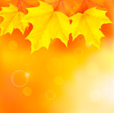Autumn background with yellow leaves Royalty Free Stock Image