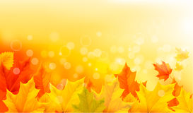 Autumn background with yellow leaves Royalty Free Stock Photography