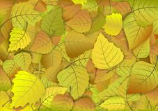 Autumn background of yellow leaves Stock Images