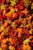 Autumn background. From yellow leaves, apples, pumpkin, red pepper. Fall season, eco food and harvest concept Royalty Free Stock Images