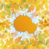 Autumn background of yellow leaves Royalty Free Stock Image