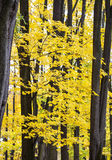 Autumn background, yellow leaves in forest Stock Photos