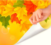 Autumn background with yellow leaves and hand Royalty Free Stock Photo