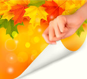 Autumn background with yellow leaves and hand Royalty Free Stock Images