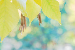 Autumn background with yellow leaves Stock Photo